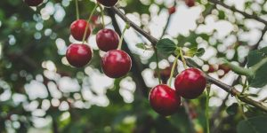 The Significance of Picking the Ideal Tree for Your Orchard