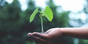 The Influence of Great Soil Quality for Your Garden