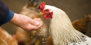 Choosing The Best Types Of Feed For Your Farm Animals – A Basic Guide