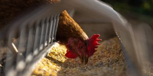 Animal Feed Basics – Things You Must Closely Check Before Choosing