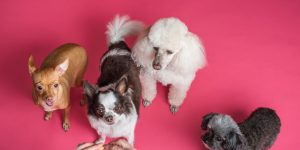 A Fundamental Guide on Dog Breeds – Picking the Right Fit for Your Family